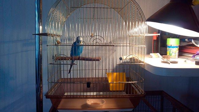 лампа для попугая
