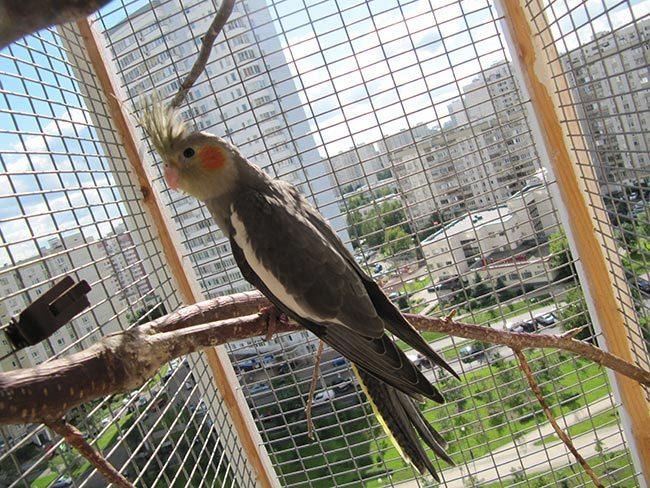 клетки для попугаев корелла