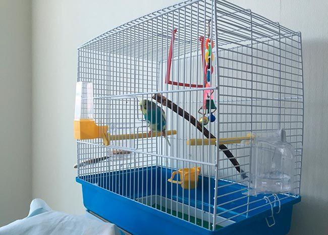 клетки для попугаев волнистых