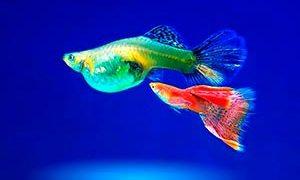 FishGorod.ru - Сайт об аквариумистике