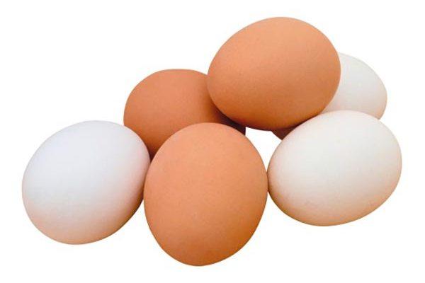 как давать яйцо попугаю