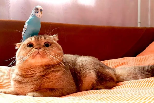 попугай и кошка