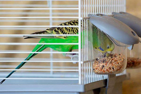 кормушки для попугаев