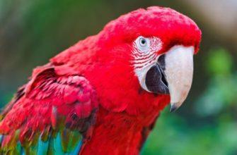 попугай не ест и не пьет