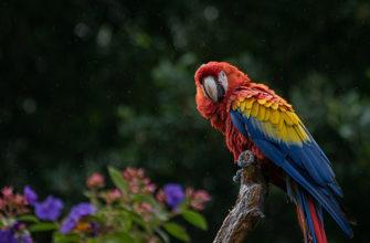 сколько стоит попугай ара